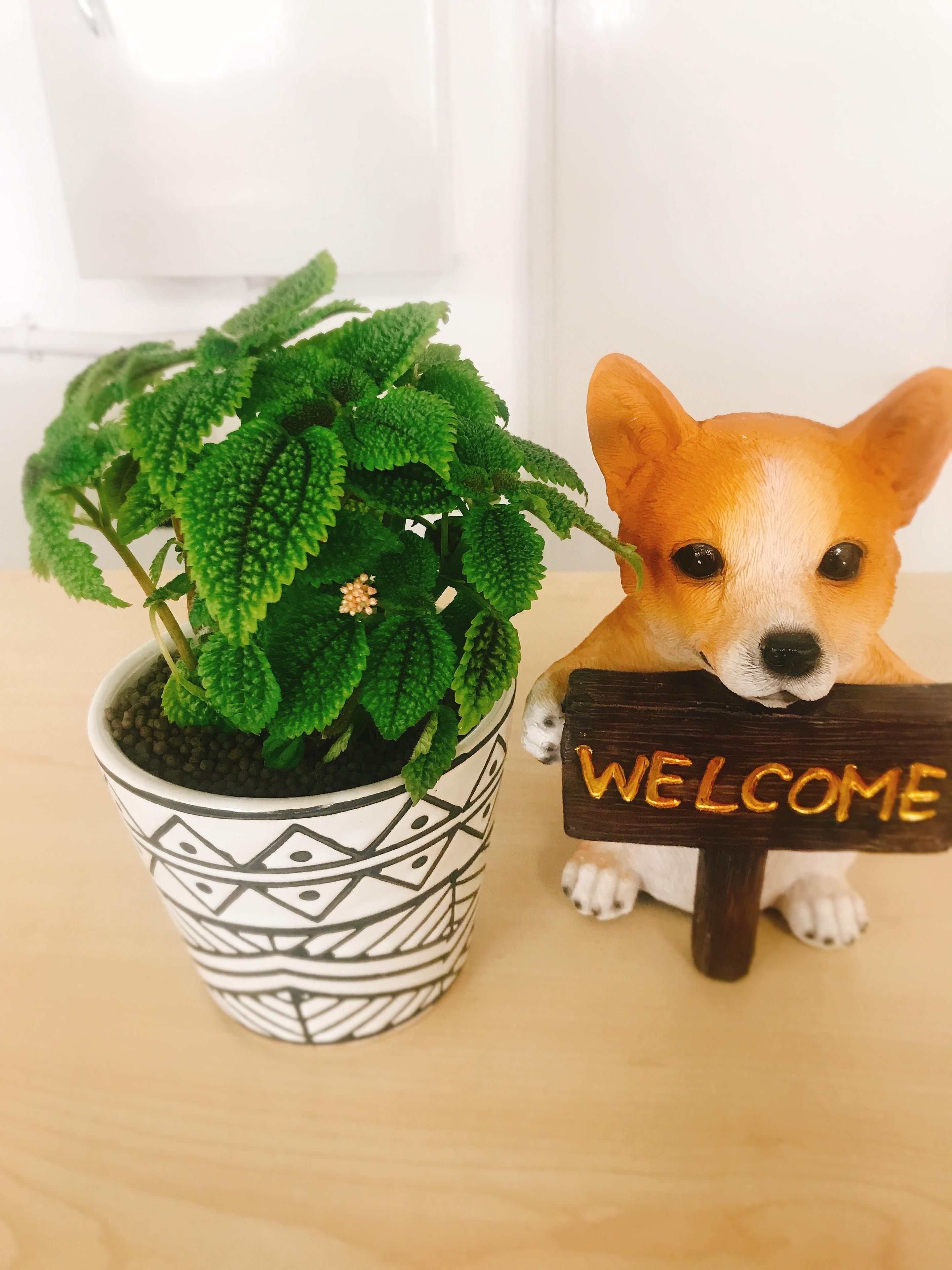 ピレア 観葉植物 弁護士 犬